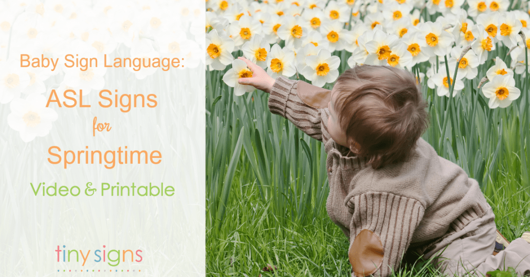 Baby Sign Language: ASL Signs for Spring
