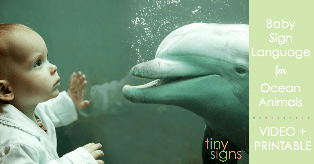 Baby Signing for Ocean Animals